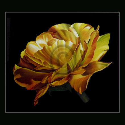 kate steele :: peony_angelica :: oil on canvas